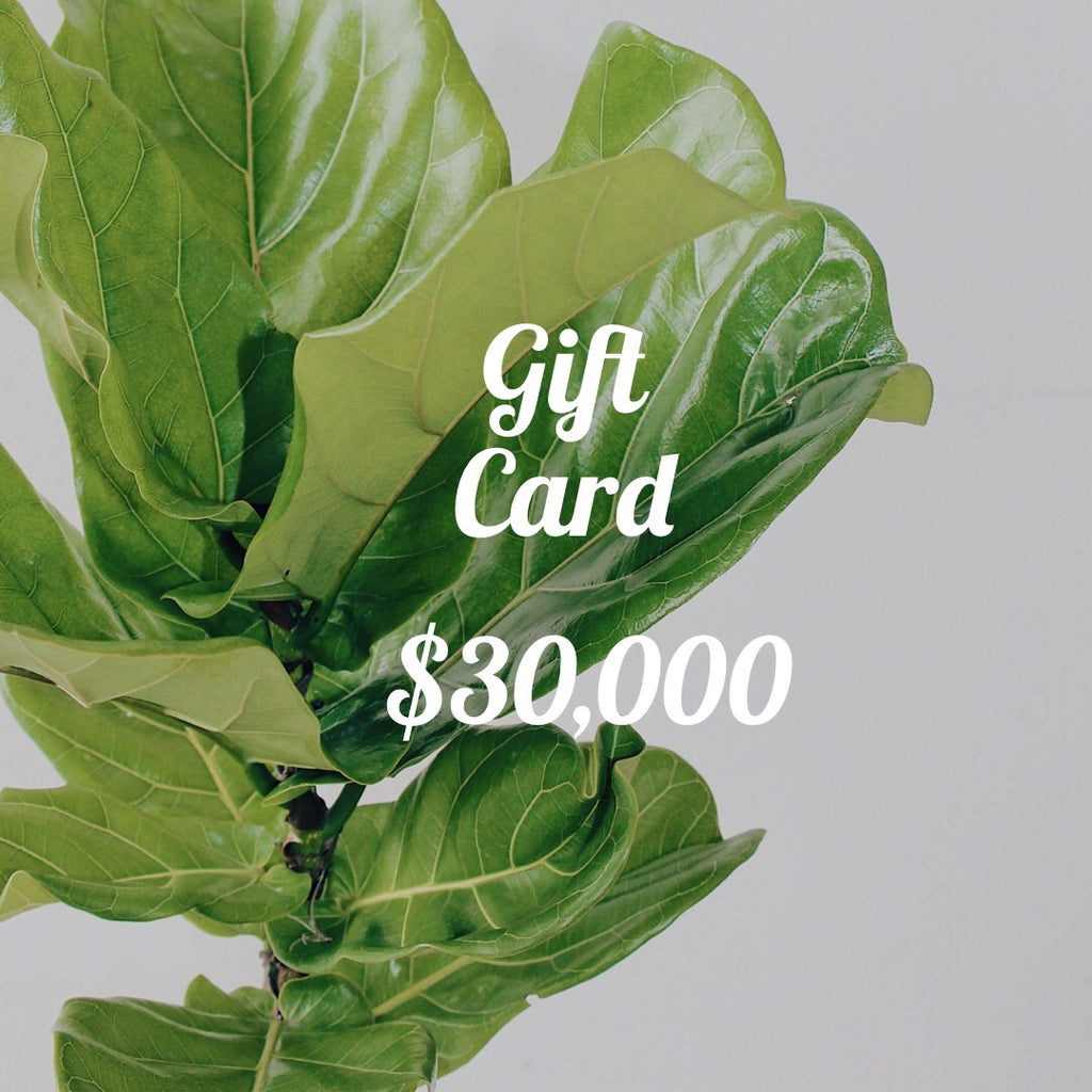 Gift Card • Urban Jungle •