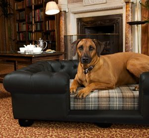 leather furniture and pets 2