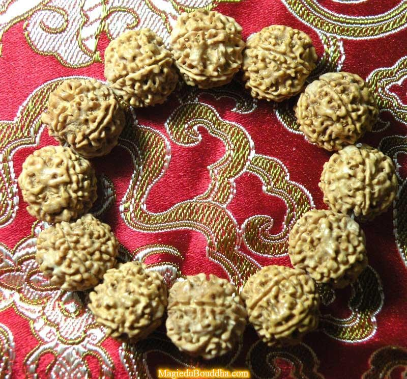 Wrist mala in rudraksha to 5 facets