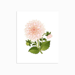 Linden Paper Co. - Prints - Cafe au Lait Dahlia