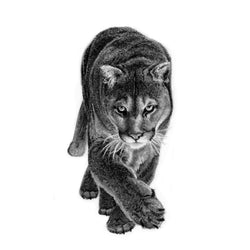 Pen on Paper - Prints - Cougar