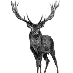 Pen on Paper - Prints - Elk