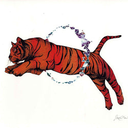 Sarch Clement – Print – Tiger