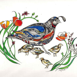 Sarch Clement – Print – Quail Family