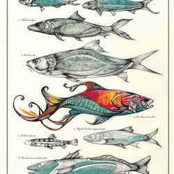 Sarch Clement – Print – Fish Chart