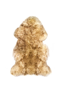 New Zealand Single Sheepskin Rug 2' X 3' - Gradient Chocolate