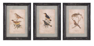 Artistic Woodland Bird Wall Decor - Assorted 3