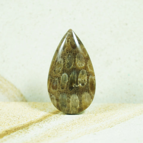 Agatized Fossil Coral Cabochon - INDOMINERAL