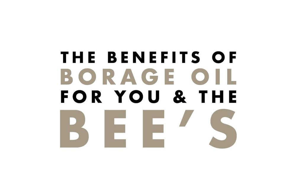 A title image 'the benefits of borage oil for you and the bees'