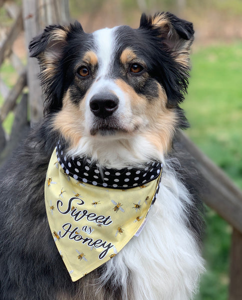The Sweet B - Pet Bandana - Snapdana/Over The Collar