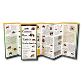 Common Bees of Eastern North America Multi-Fold Guide