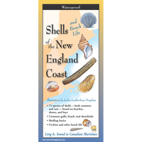 Shells & Beach Life of the New England Coast - Multi-Fold Field Guide