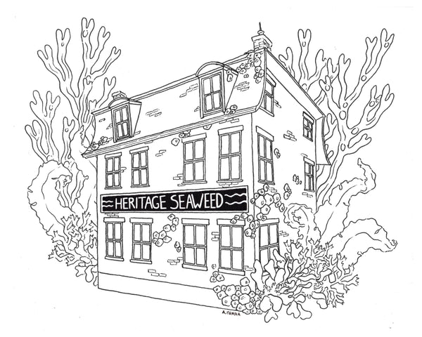 Heritage Seaweed Shop Coloring Page · Free PDF · Featuring North Atlantic Seaweeds