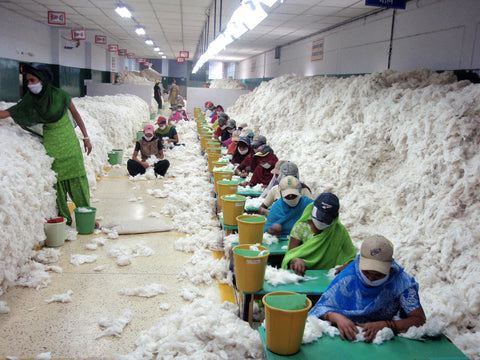 Cotton Processing and Sorting in India