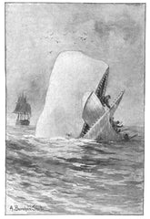 A Whale of a Tale (Plot points and narrative structure in Melville's Moby Dick)