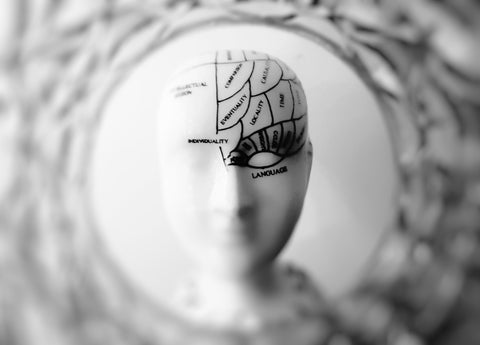 Writer Brain verus Reader Brain—a new look at showing and telling in fiction