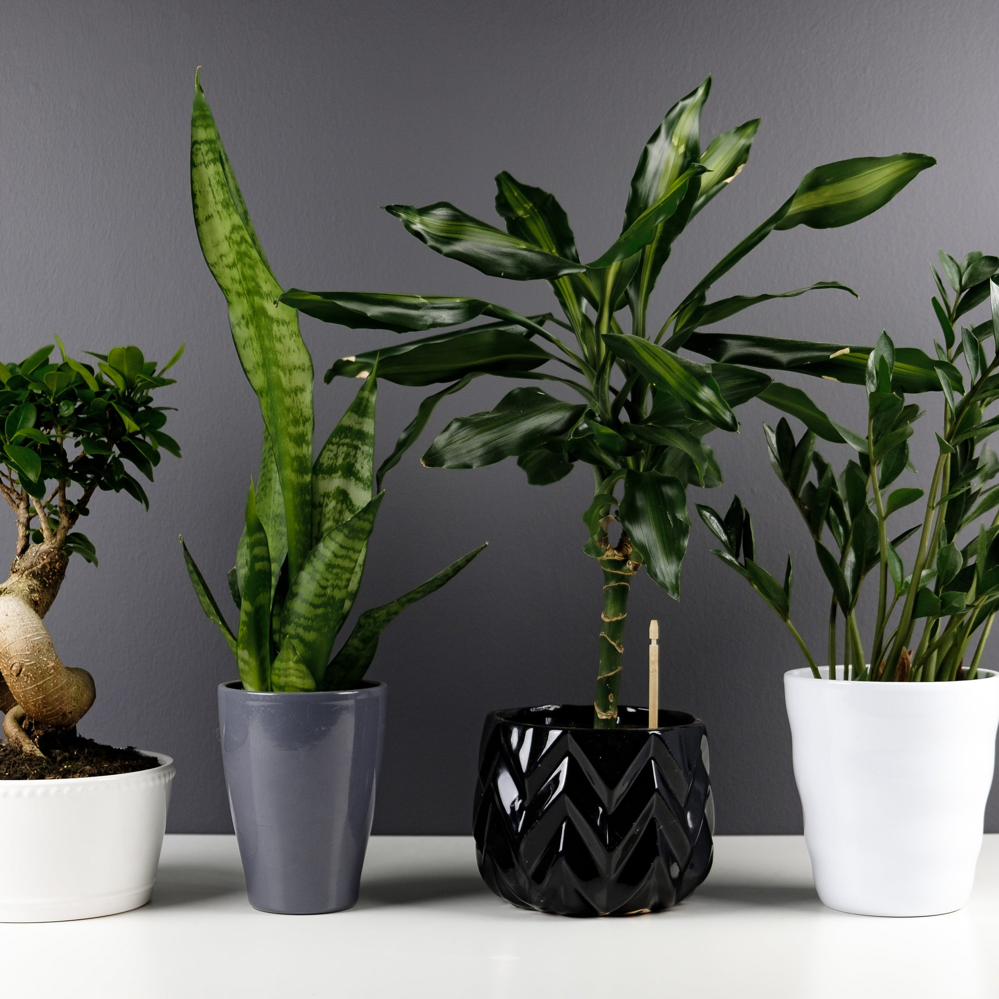 Faux Plants Available at House of Flora