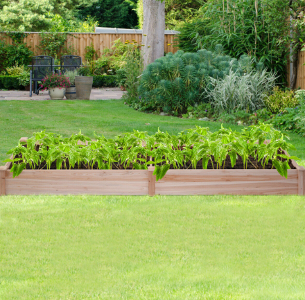 Image of Wooden Raised Vegetable Garden Bed
