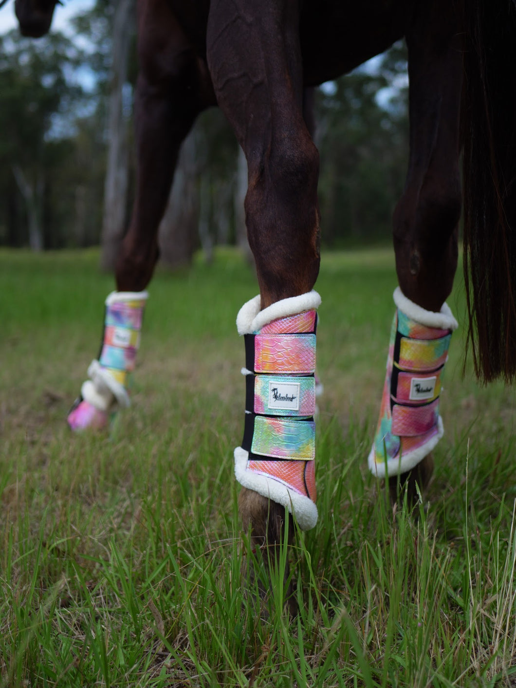 Sunset Tendon Boots - Limited Edition