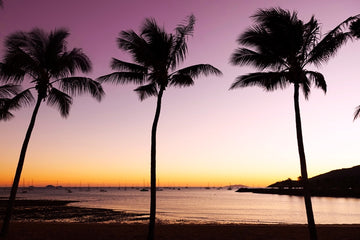 Airlie Beach Palm Trees at Sunrise
