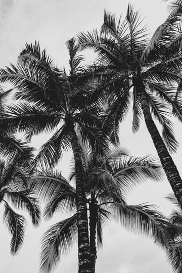 Hawaii-Palms