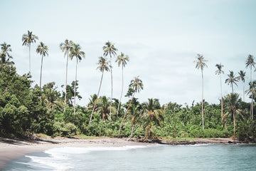 Secluded Samoa Palms