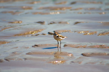 Bird standing on beach at low tide
