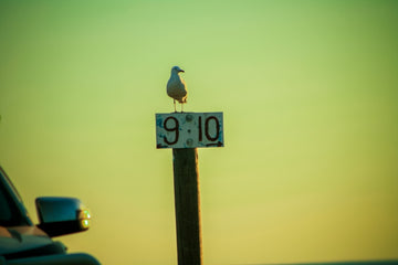 Seagull standing on sign