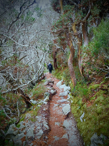 Tasmanian Wilderness Walk