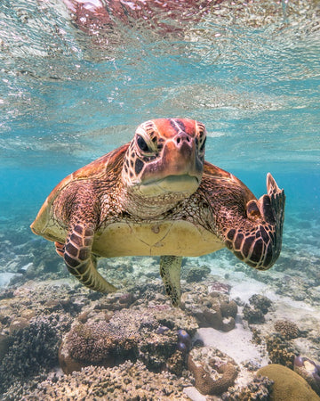 Terry the Turtle Flipping the Bird
