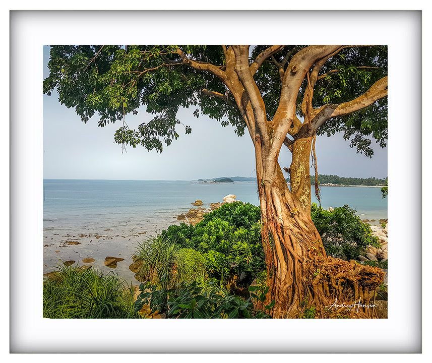 Tree on the Beach 2