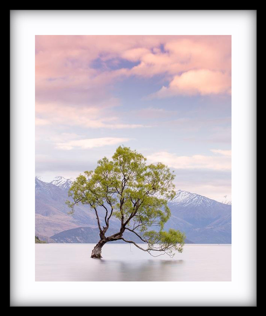 Wanaka Tree NZ