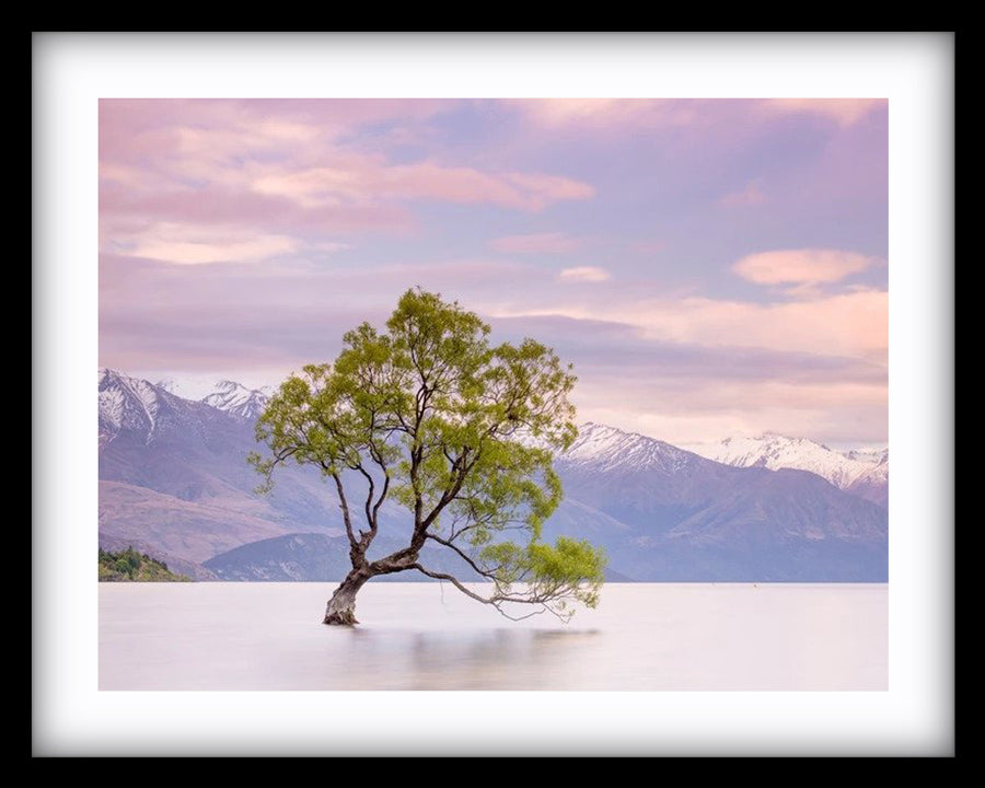 Wanaka Tree Evening Hues