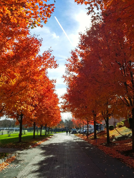College campus road in the fall