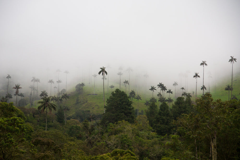 'Awakening of Cocora Valley' by Aleix Planas Saborit