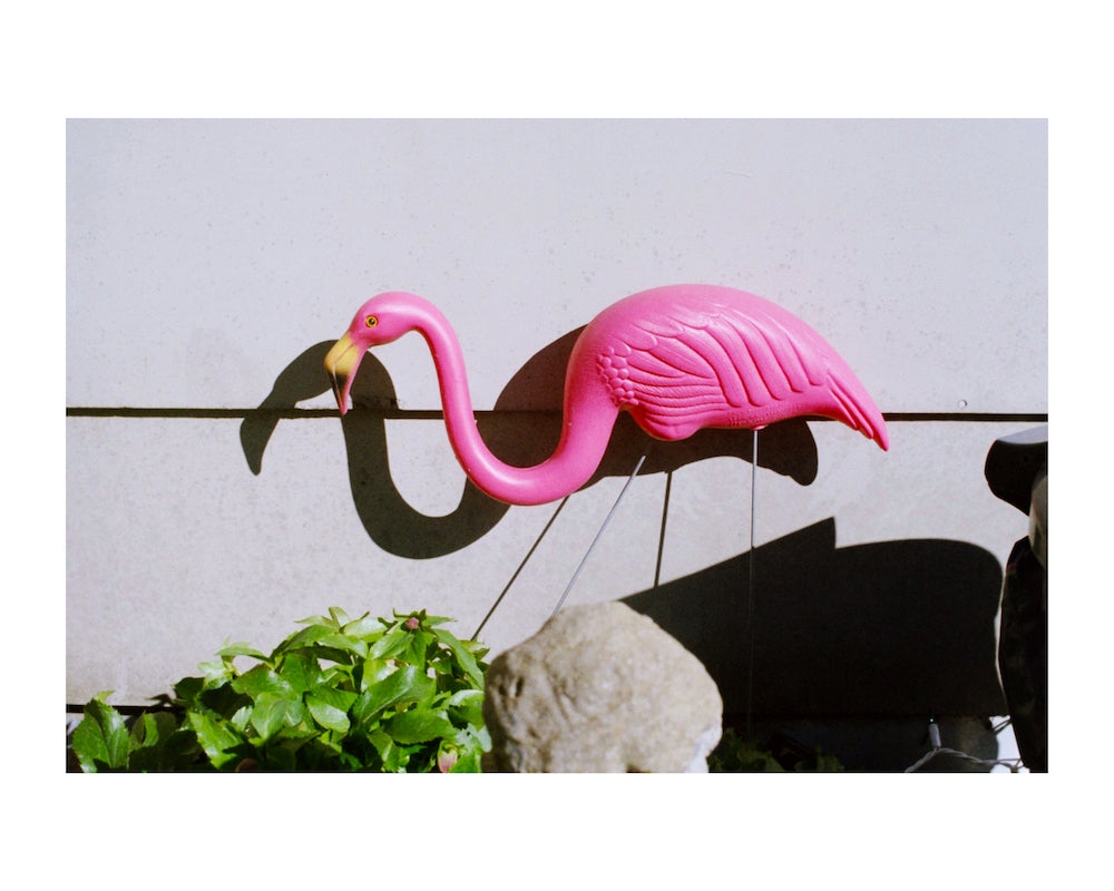 'Pink Flamingo. Memphis, Tennessee, 2015' by Andrew Diffee