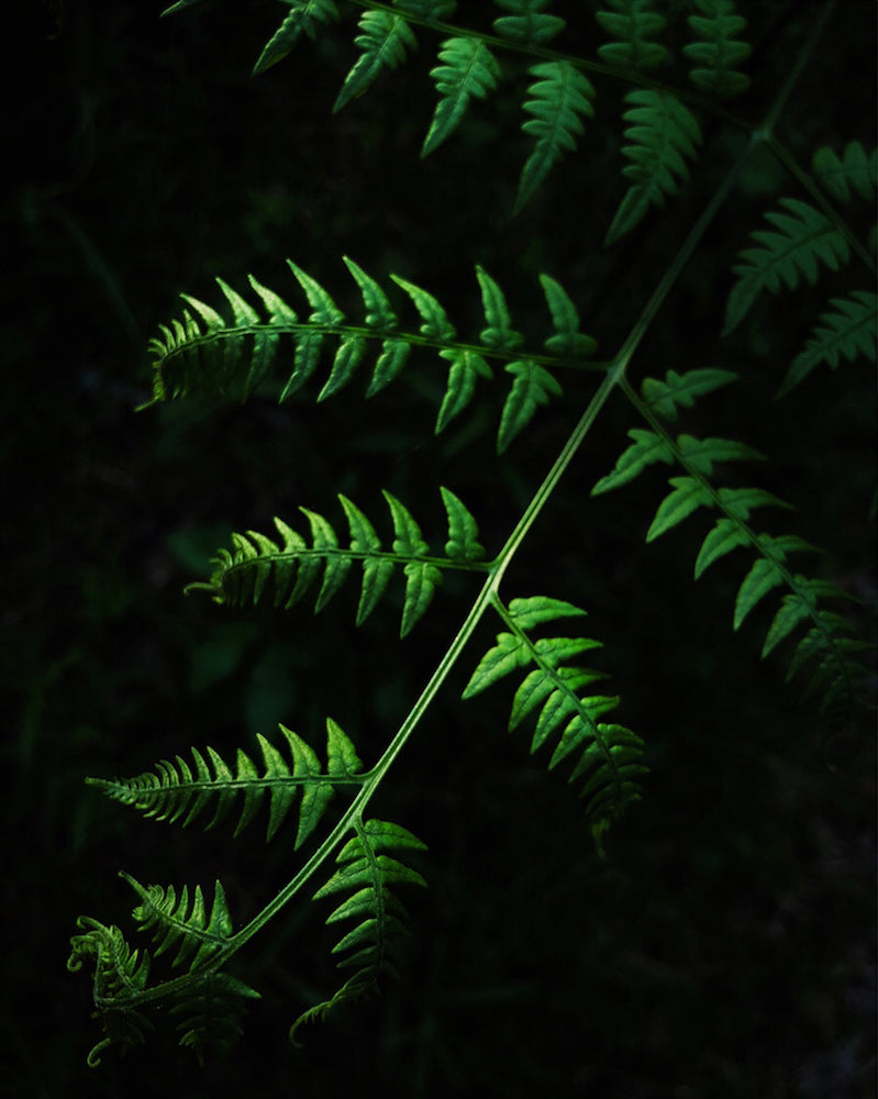 'Afternoon Fern' by Christianne Ebel