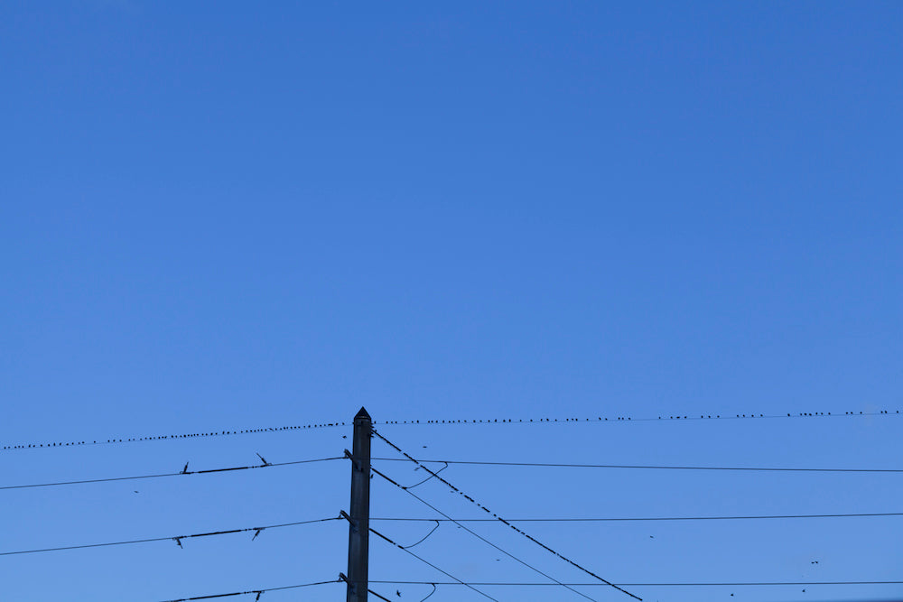 'Minimal Skies / Thousands of Birds.' by David Wilman