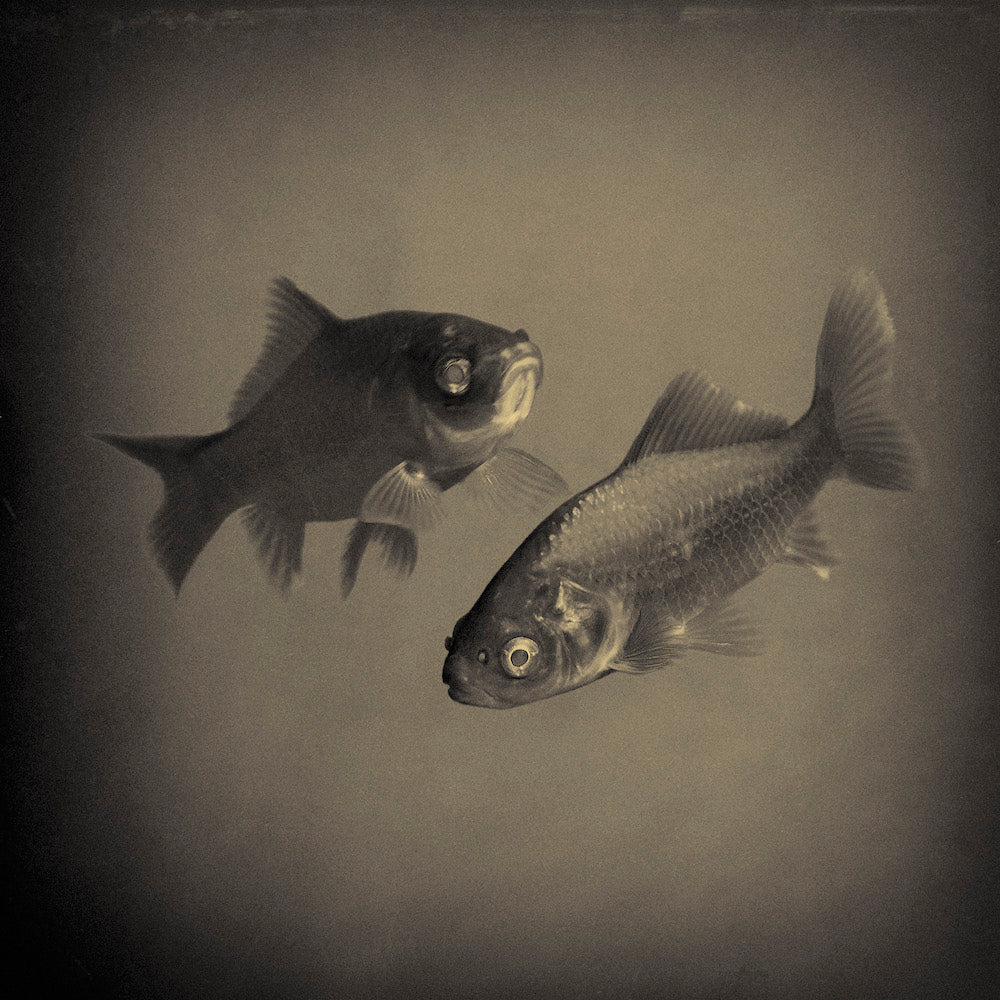 'two lost souls swimming in a fishbowl' by Henk van der Stouw