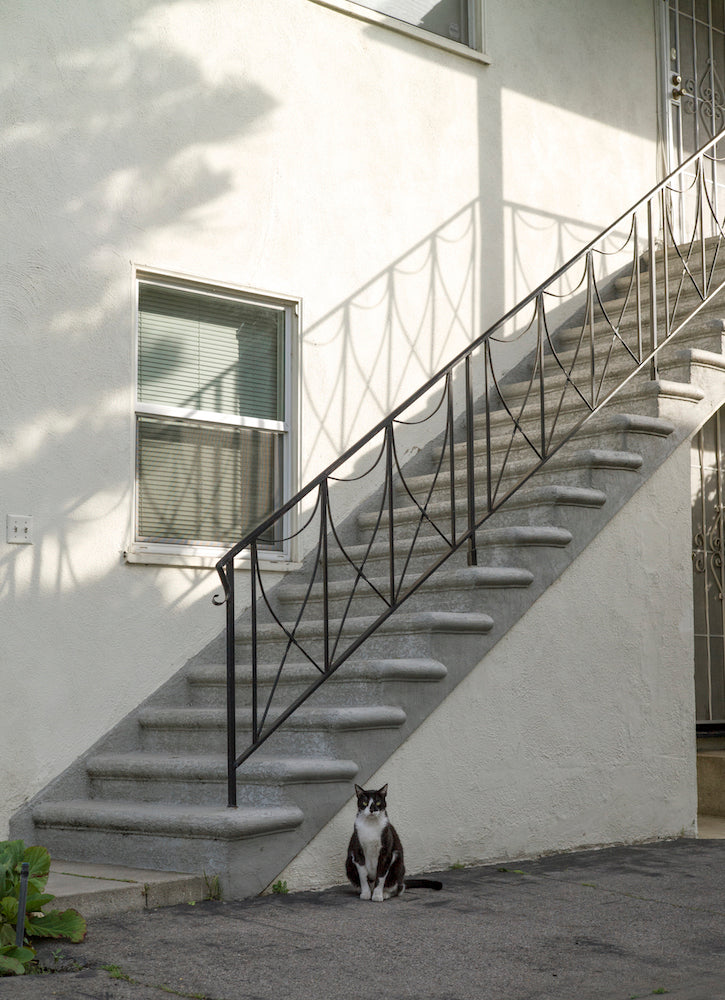 'The Cat Next Door' by Joel DeGraff