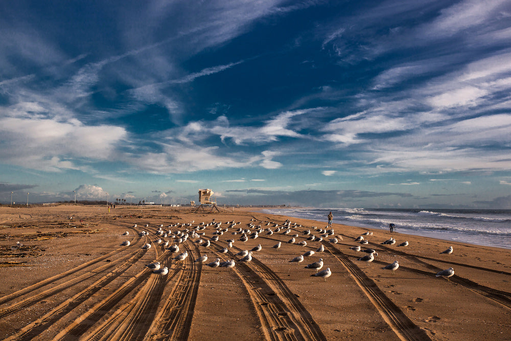'Parked Seagulls on Huntington Beach, CA' by Joelle Gueguen