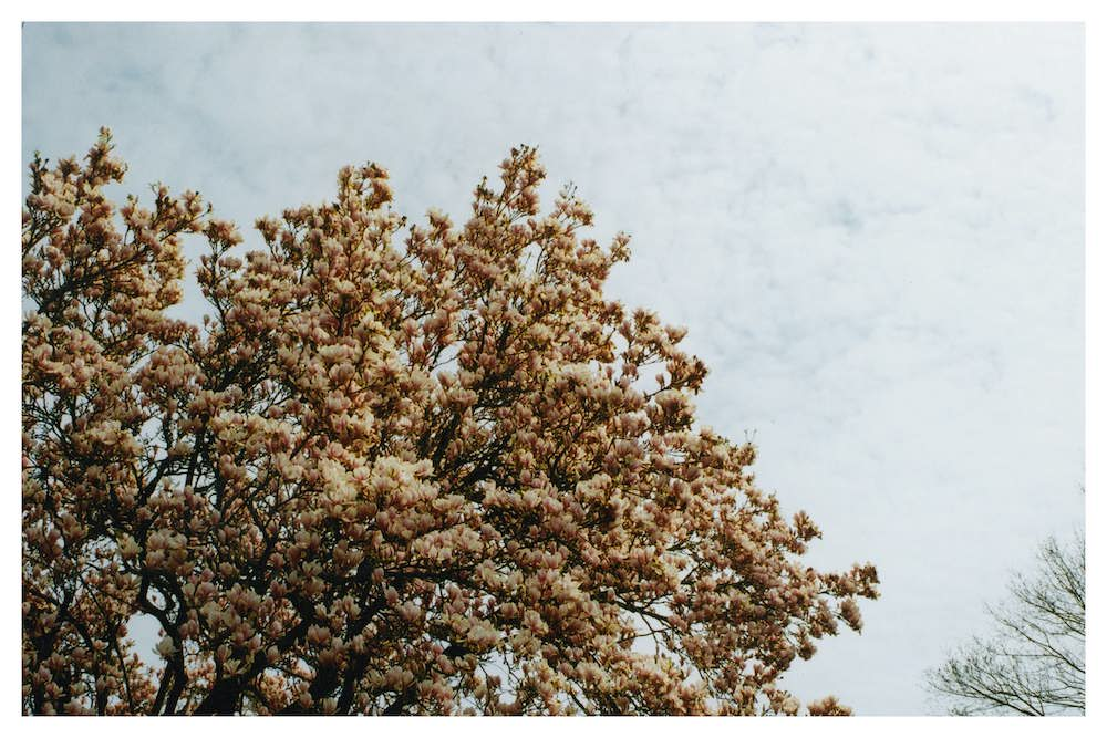 'Blossoms' by Kasey Height