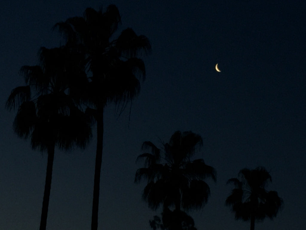 'Crescent Morning/Crescent Drive, Beverly Hills, CA' by Steve Robles
