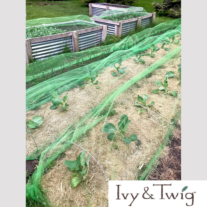 Vegetable Garden Protection Using Wire Hoops and Nylon Netting