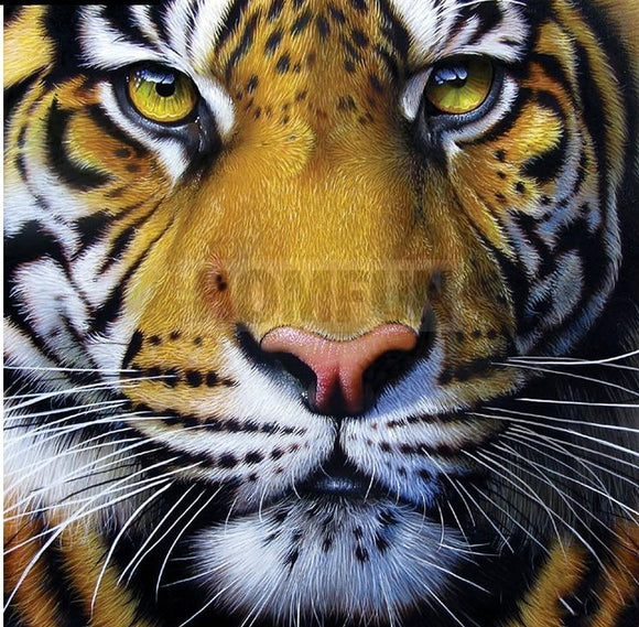 Tiger Face Diamond Painting Starter Kit ~ 8x8