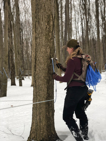 Nikki tapping a maple tree
