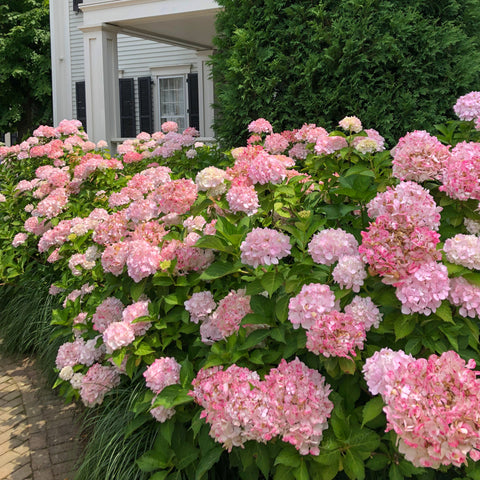 nantucket hydrangea Ellis Wilson designs vacation style handbags made in USA