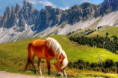 Kordi Vahle's Dolomites with Pony Photo Print