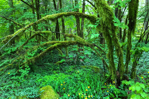 Rich Sanders' Rainforest Photo
