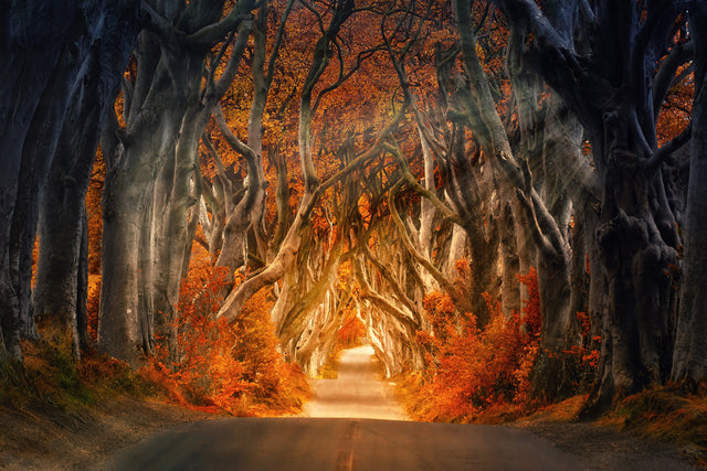 Johannes Plenio's Dark Hedges